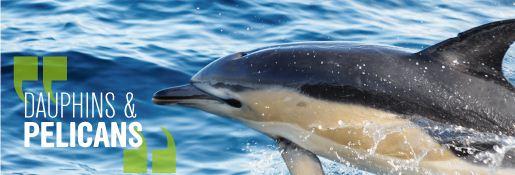 dauphins une